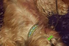 Briard-Fanny-Webband-Daisy-Dot-grün