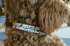 Kleinpudel-NaikaWebband-Poodle-Love