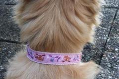 Mischling-Webband-Hunde-pink