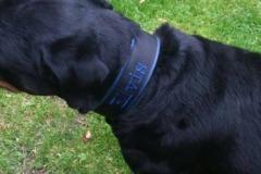 Rottweiler-Elvis-besticktes-Halsband