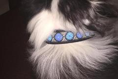 Sheltie-Slider-Borte-Daisy-Dot-blau