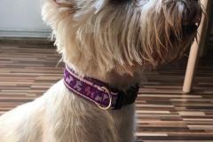 Westie-Webband-Terrier
