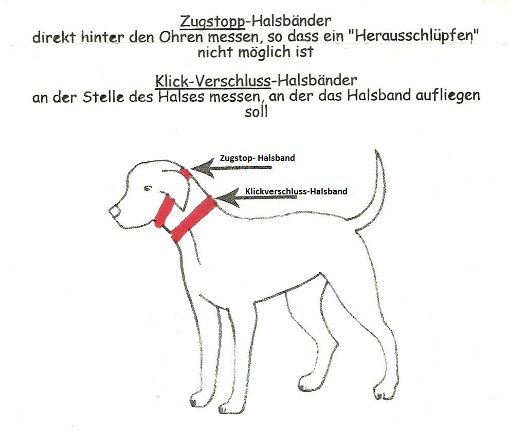Messanleitung für das Hundehalsband